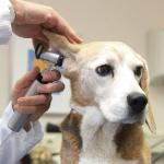 ЛОР инструменты для ветеринарии